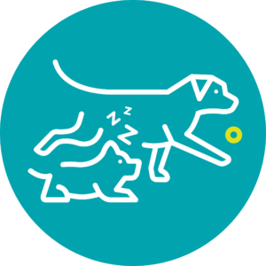 Doggy Day Care Age Requirements Icon