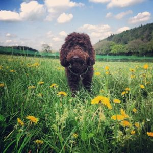 Barney at Primrose Hill Doggy Day Care