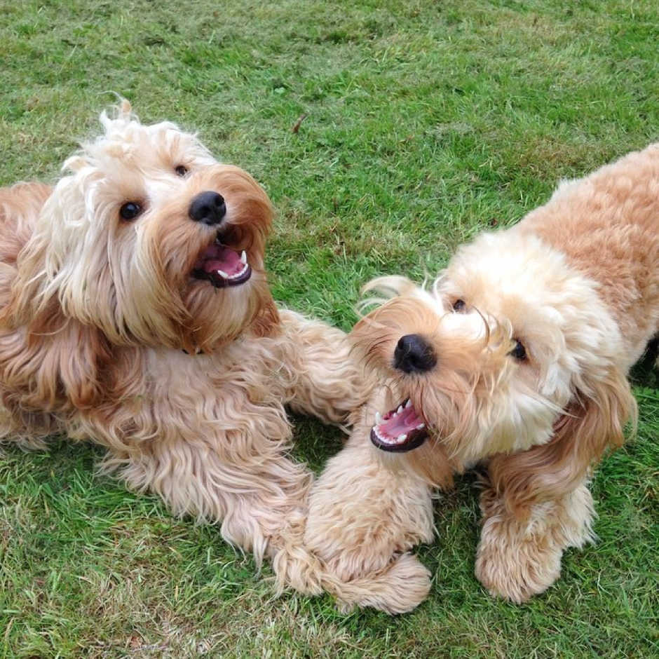 Toby & Coco the dogs at Buddies Doggy Day Care